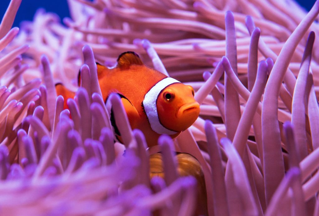 Image-fish-great-barrier-reef-scuba-diving