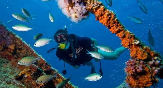 Aruba-scubadiving-divingpassport-diver-wreck