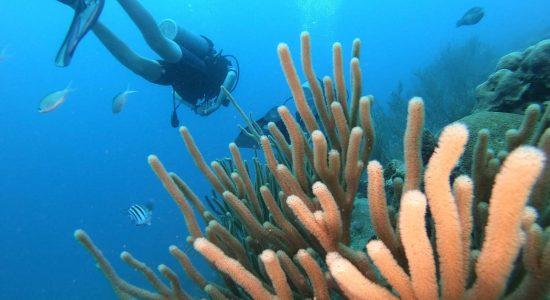dominican-republic-scubadiving-divingpassport-diver