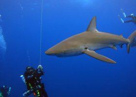 galapagos-ecuador-divingpassport-scubadiving-shark