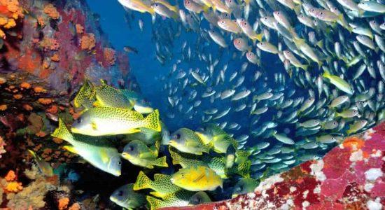 Madagascar fish