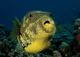 mozambique-divingpassport-scubadiving-fish