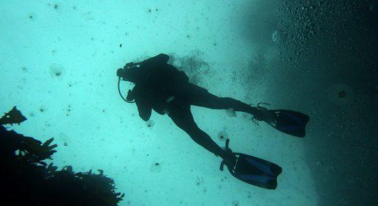 new-zealand-scubadiving-divingpassport-diver
