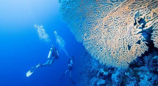 solomon-islands-scubadiving-divingpassport-coral