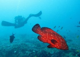 scubadiving-divingpassport-south-africa-diver