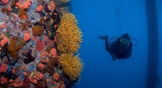 saint-vincent-and-the-granadines-scubadiving-divingpassport-diver