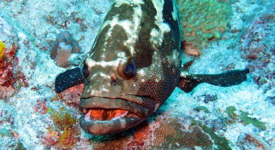 Vanuatu-divingpassport-scubadiving-fish