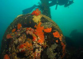 Vanuatu-divingpassport-scubadiving-diver-espiritu-santo