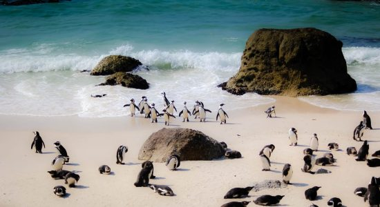 scubadiving-divingpassport-south-africa-penguin