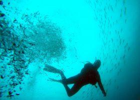 australia-scubadiving-divingpassport-