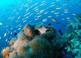 mauritius-island-divingpassport-scubadiving-reef