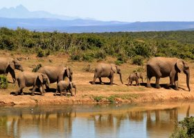 scubadiving-divingpassport-south-africa-elephant