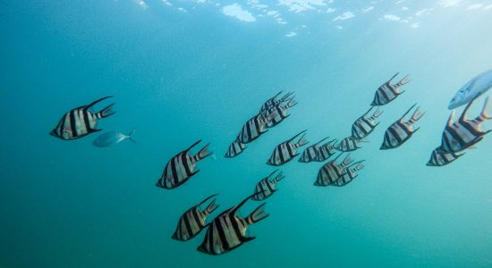 australia-scubadiving-divingpassport-fish