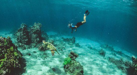 hawaii-scubadiving-divingpassport-kauai-apnea-diver