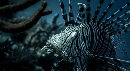 turks-and-caicos-islands-scubadiving-divingpassport-fish