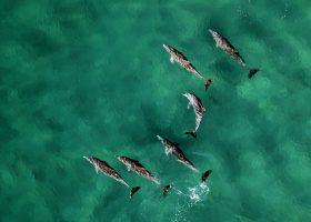 mozambique-divingpassport-scubadiving-dolphins